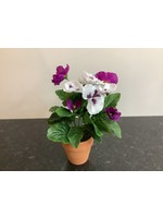 Potted Pansy purple 25cm