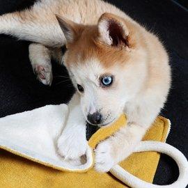 Duvo+ Puppydoekje snoozi 30x30 cm