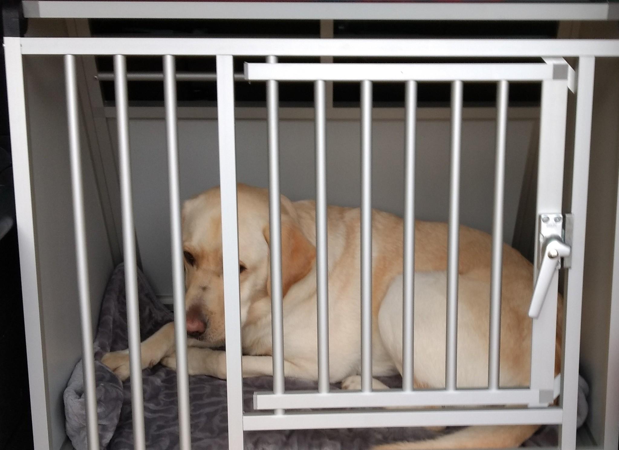 Labrador in Hundos pro M