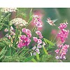 Wild Sweet Pea Box Note Cards
