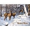 Wildlife Winter assorti Kerstkaarten.