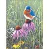 Bluebird In Prairie Note Cards