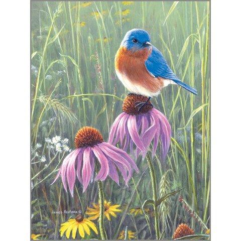 Bluebird In Prairie