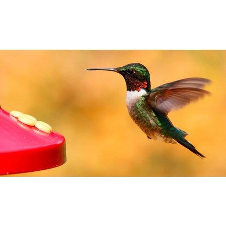 Avian Nectar Colibri