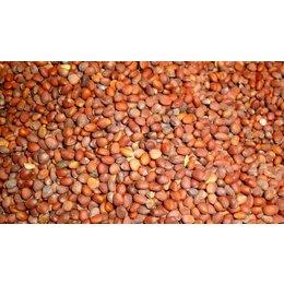 Radish Seed (1 kg)