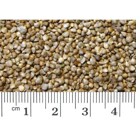 Spinach Seed (1 kg)