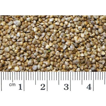 Spinaziezaad (1 kg)