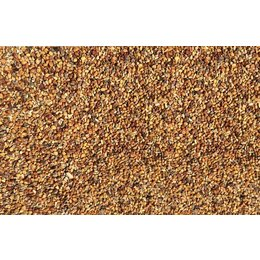 Clover seed (1 kg)