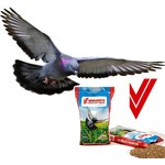 Show Pigeons