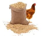 Nourriture pour poulets