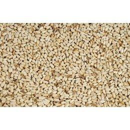 Cardi ou graine de Carthame (1 kg)