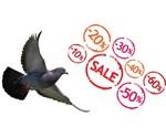 Offres Boutique Pigeon
