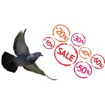Offer Pigeonshop
