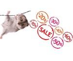 Angebote Kleintiere Shop