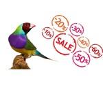 Angebote Vogelshop