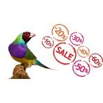 Offres Boutique Oiseaux