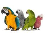 Nourriture pour perroquets