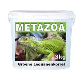 Metazoa Iguane vert