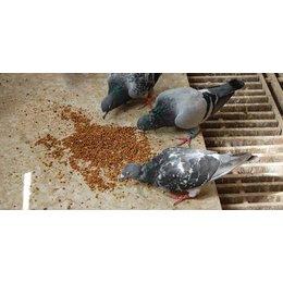 Teurlings Aliments énergétiques et d'élevage (Tovo)