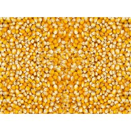 Vanrobaeys Kleine Cribbs maïs (No. 198)