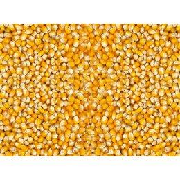 Vanrobaeys Small Cribbs maize (No. 198)