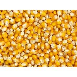 Vanrobaeys Gele Cribbs maïs (Nr. 78)