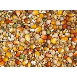 Vanrobaeys Racing red and yellow Cribbs maize (No. 3)