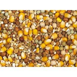 Vanrobaeys Zuchtmischung mit gelben Cribbs-Mais (Nr. 2)