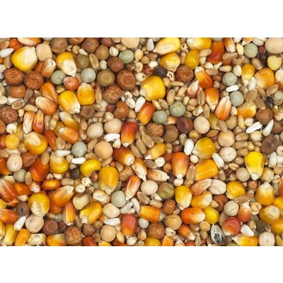 Vanrobaeys Breeding red and yellow Cribbs maize (Nr. 1)
