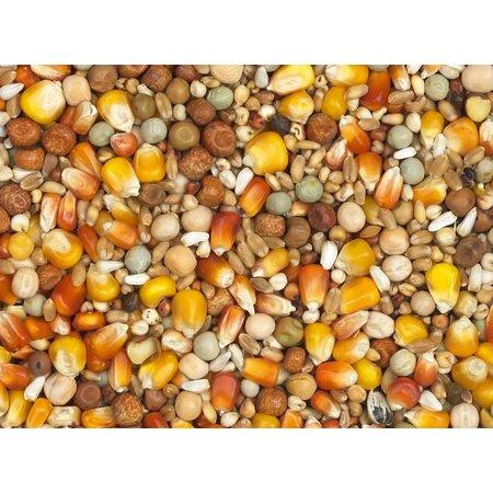 Vanrobaeys Zuchtmischung mit roten und gelben Cribbs-Mais (Nr. 1)