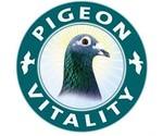 Vitalité Pigeon