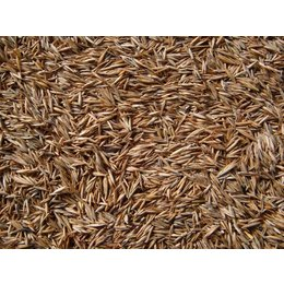 Grass seed (1 kg)