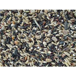 Koenings Finches - Brambling (20 kg)