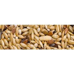 Teurlings 216 - Kanarien ohne Rübsen (25 kg)