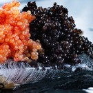 Altonaer Kaviar Import Imitation caviar - black
