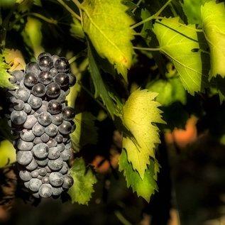 Trentanove Azienda Montauto Rosso Toscana Maremma, rode wijn, Sangiovese 80% en Ciliegiolo 20%