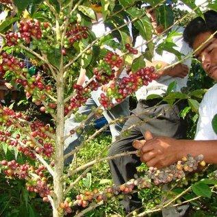 Gusto Inti Punku - Fairtrade - Snelfiltermaling