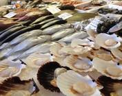 Fisch und Fischprodukte