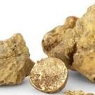DeliCroatia Verse witte truffels (tweede klasse)