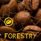 Harar Coffee Forestry koffiebonen