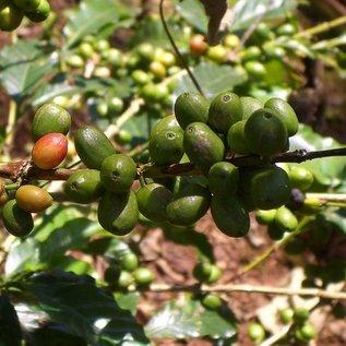 Harar Coffee Lem Keffa bonen