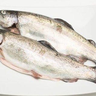 Zalmforel - ca. 450 gr