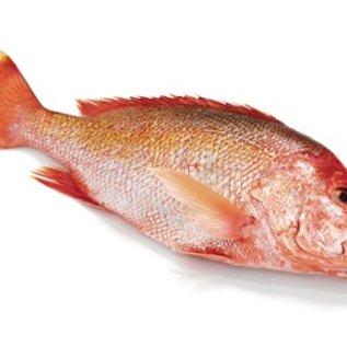Red Snapper - 100 gram