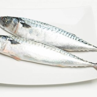Makreel - ca. 300 gr