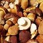 NaturBosco Ceruti Funghi porcini secchi
