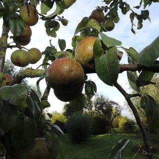 FOODbazar camping & lodging Fruit & Noten, onbemest, onbespoten, onverzorgd