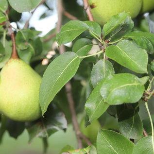 FOODbazar camping & lodging Fruit & Nuts, non-fertilized, unpainted, unkempt