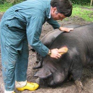 Attorney (vom Schwein)