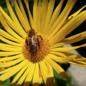 Čebelarstvo Miha Tekavčič Slowenischer Blumenhonig / Cvetlični med