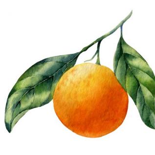 Ölmühle Solling Essigcreme Orange / Essigcreme Orange